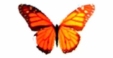 Butterfly-on-Desktop-real-logo