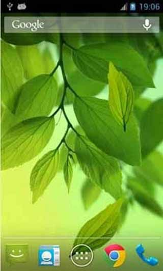 Leaf-Live-Wallpaper