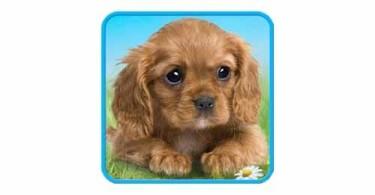talking-puppy-logo